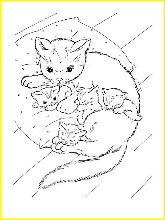 sketsa gambar kucing tidur dan menyusui anaknya
