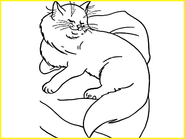 sketsa gambar kucing tidur di kasur