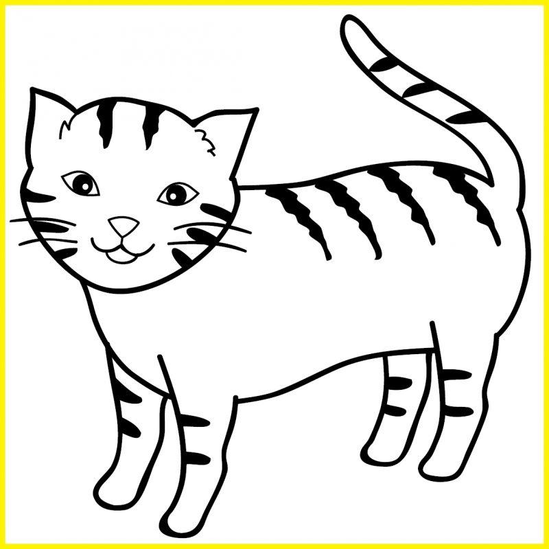 sketsa gambar kucing untuk anak tk