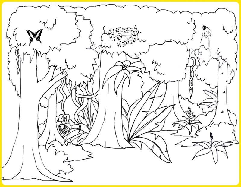 sketsa gambar pemandangan hutan
