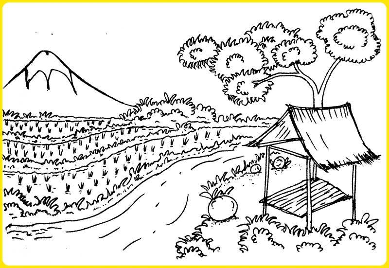 sketsa gambar pemandangan sawah