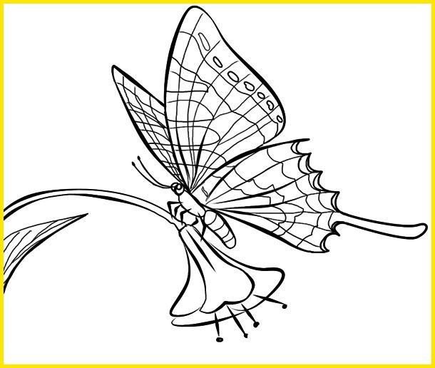 sketsa kupu kupu hinggap di tangkai bunga
