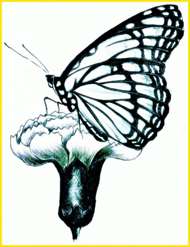 sketsa kupu kupu motif tulang daun