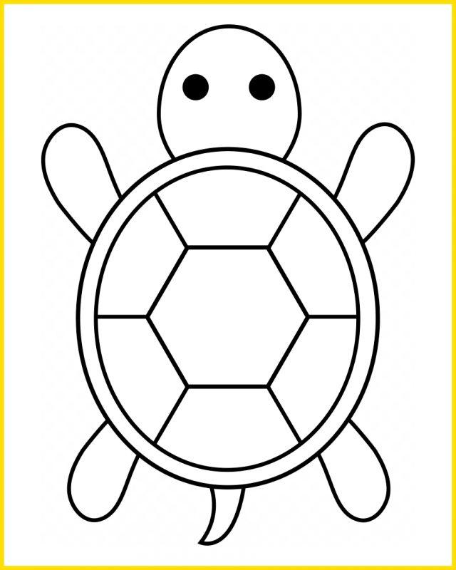 sketsa kura kura dari atas