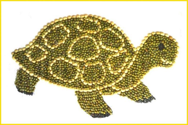 sketsa kura kura dari biji bijian menggemaskan