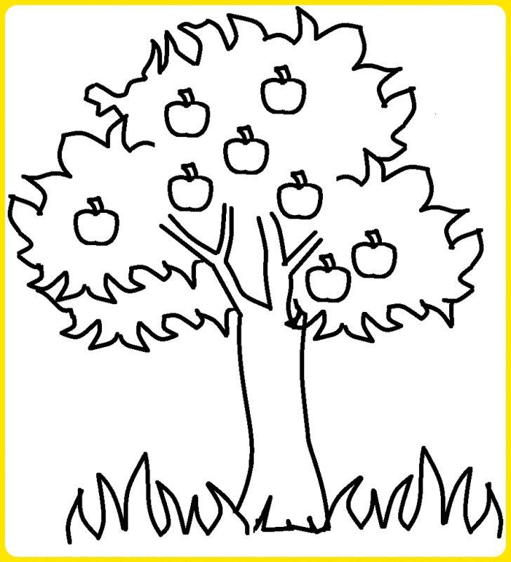sketsa pohon apel berbuah