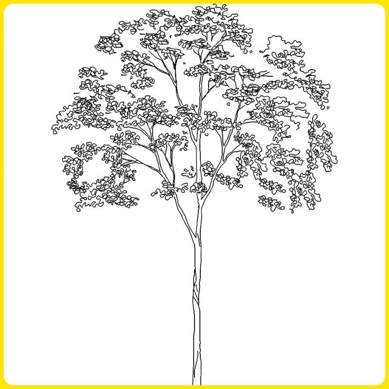 sketsa pohon arsitekstur