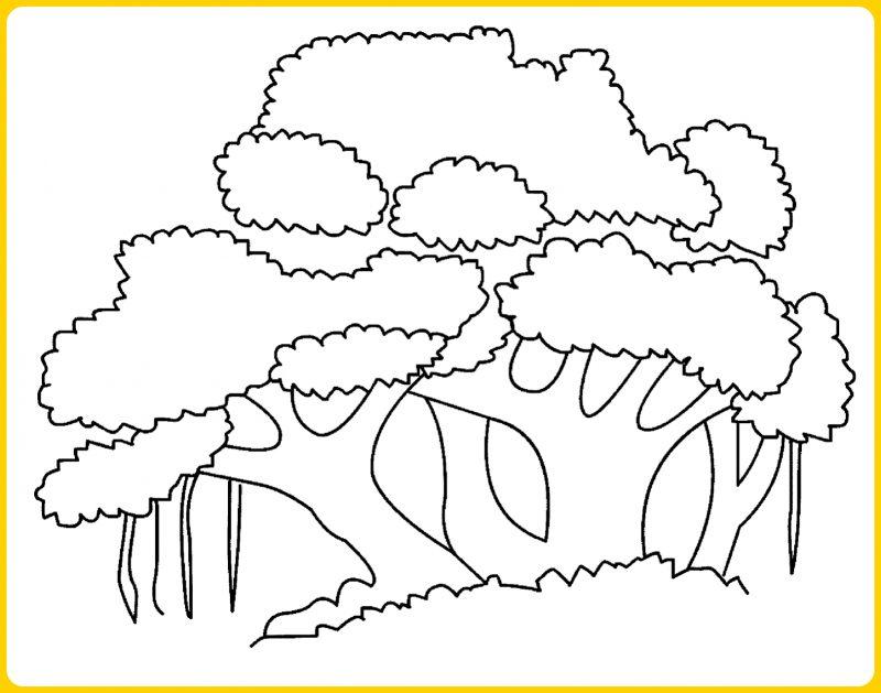 sketsa pohon bringin