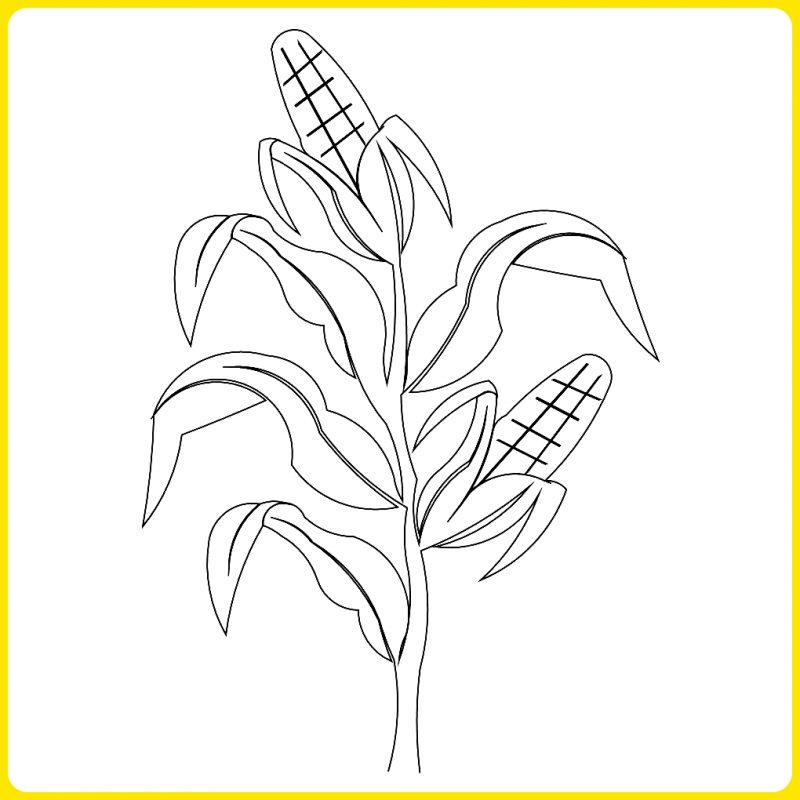 sketsa pohon jagung