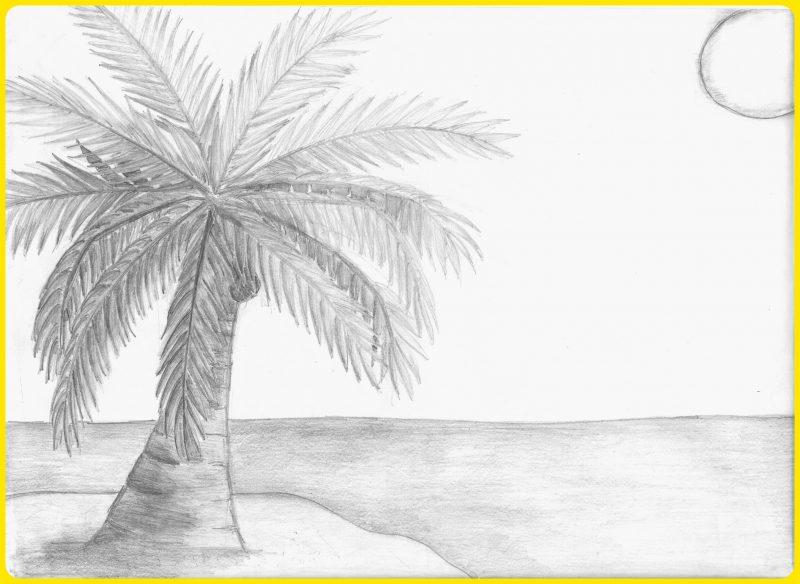 sketsa pohon kelapa di pantai
