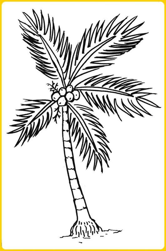 sketsa pohon kelapa