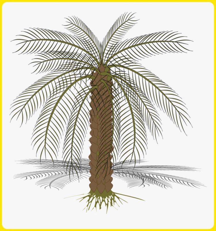 sketsa pohon kurma