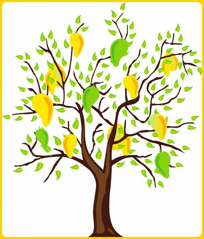 sketsa pohon mangga