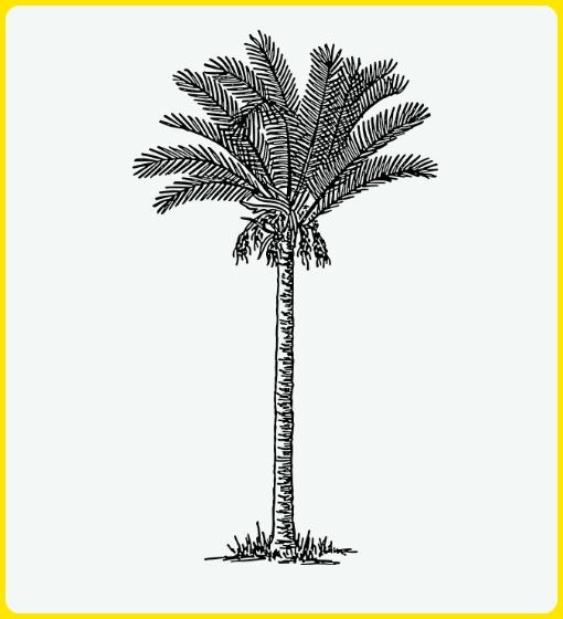 sketsa pohon palem