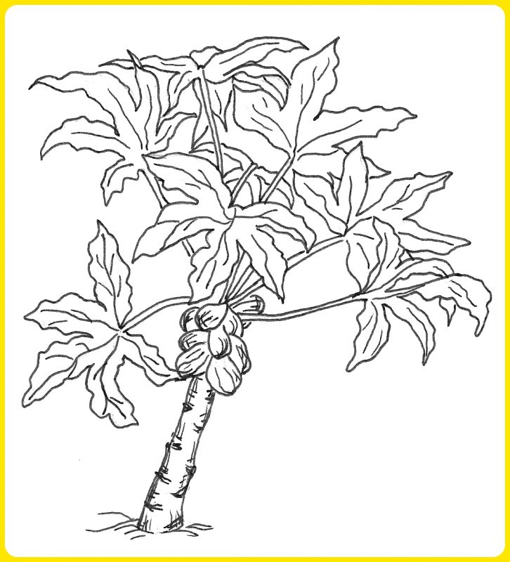 202 Gambar Sketsa Pohon Unik Menarik Mudah Dibuat Sindunesia
