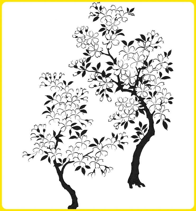 sketsa pohon sakura