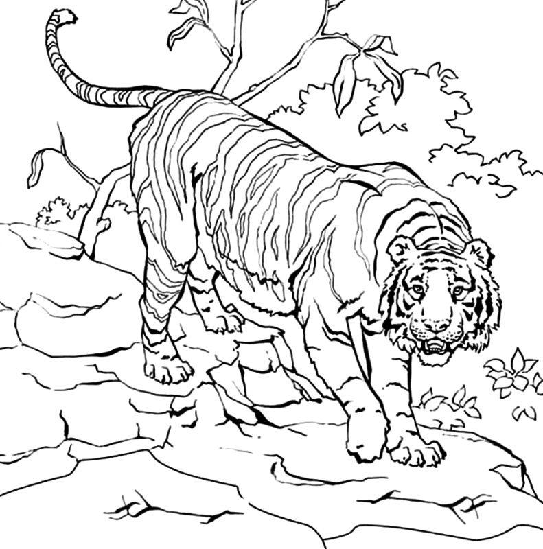 gambar harimau di hutan
