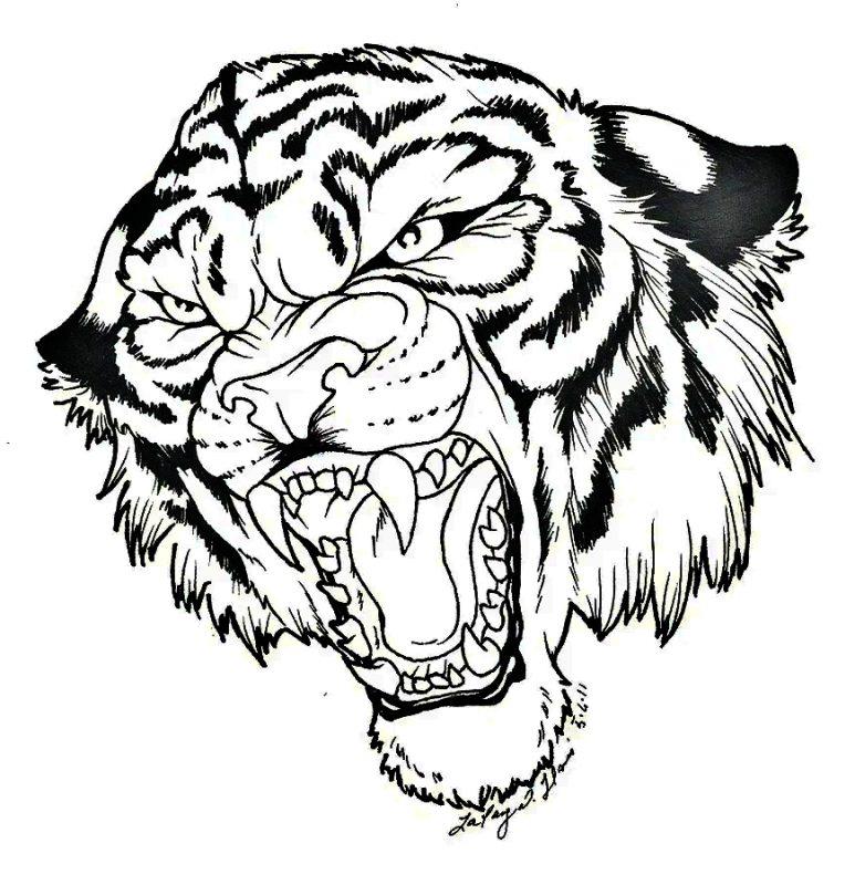 mewarnai kepala harimau