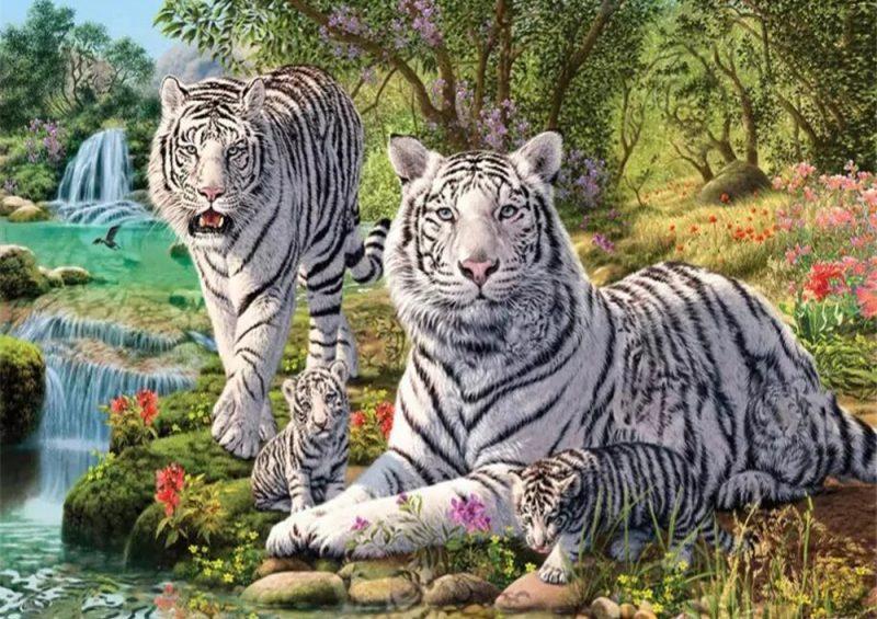 sepasang harimau putih bersama anaknya