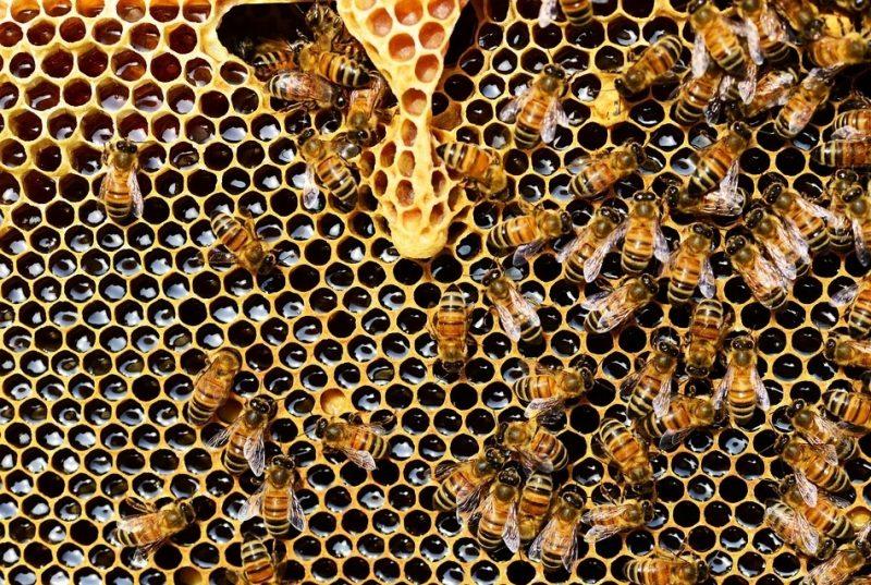 Aneka Manfaat Lebah