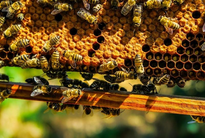 daur hidup lebah