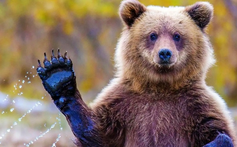 Kerajinan Serat Hewan Bulu Beruang