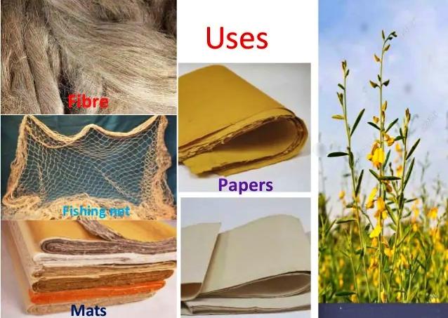 kerajinan dari serat tumbuhan sunn